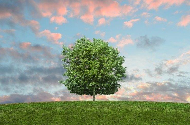 1っ本で立つ木